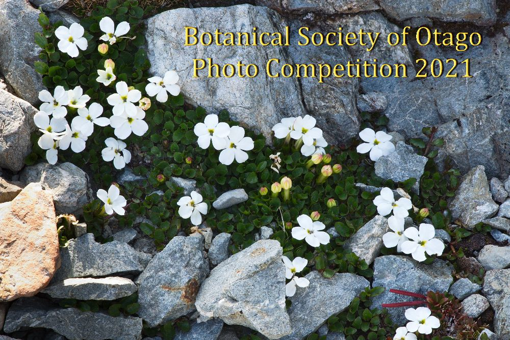 bso-photo-competition_dsc_7289.jpg